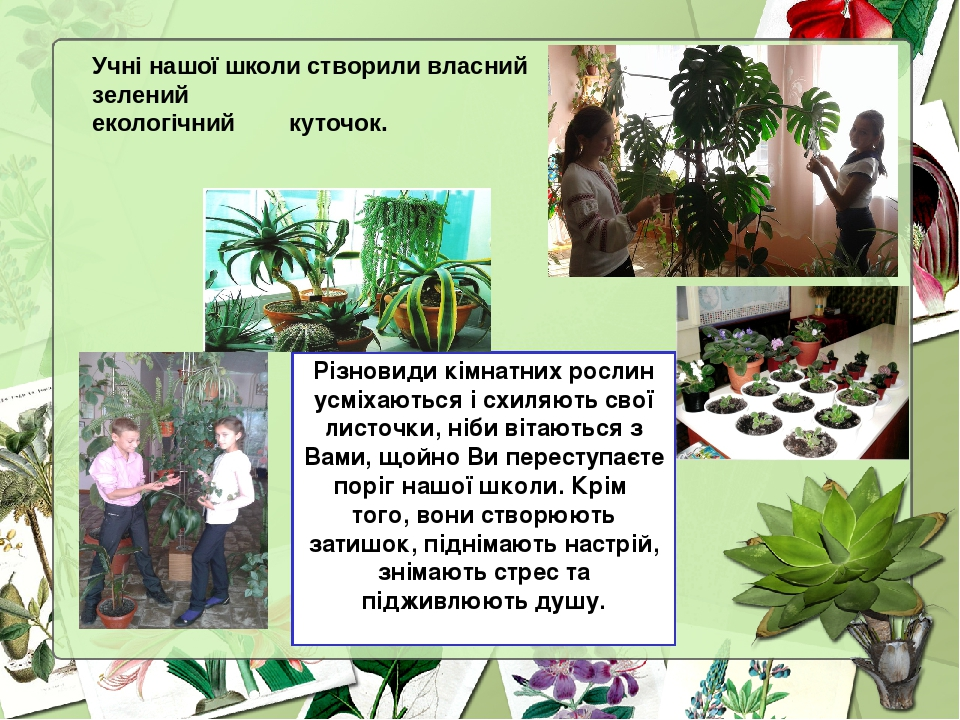 Різновиди кімнатних рослин усміхаються і схиляють свої листочки, ніби вітаються з Вами, щойно Ви переступаєте поріг нашої школи. Крім того, вони ст...