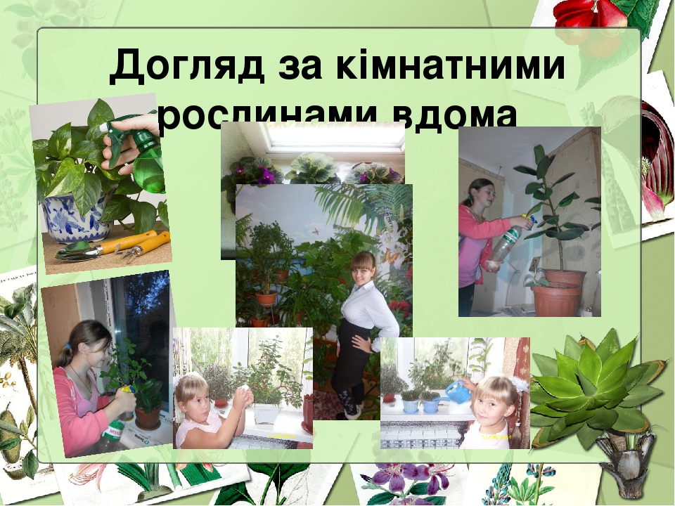 Догляд за кімнатними рослинами вдома