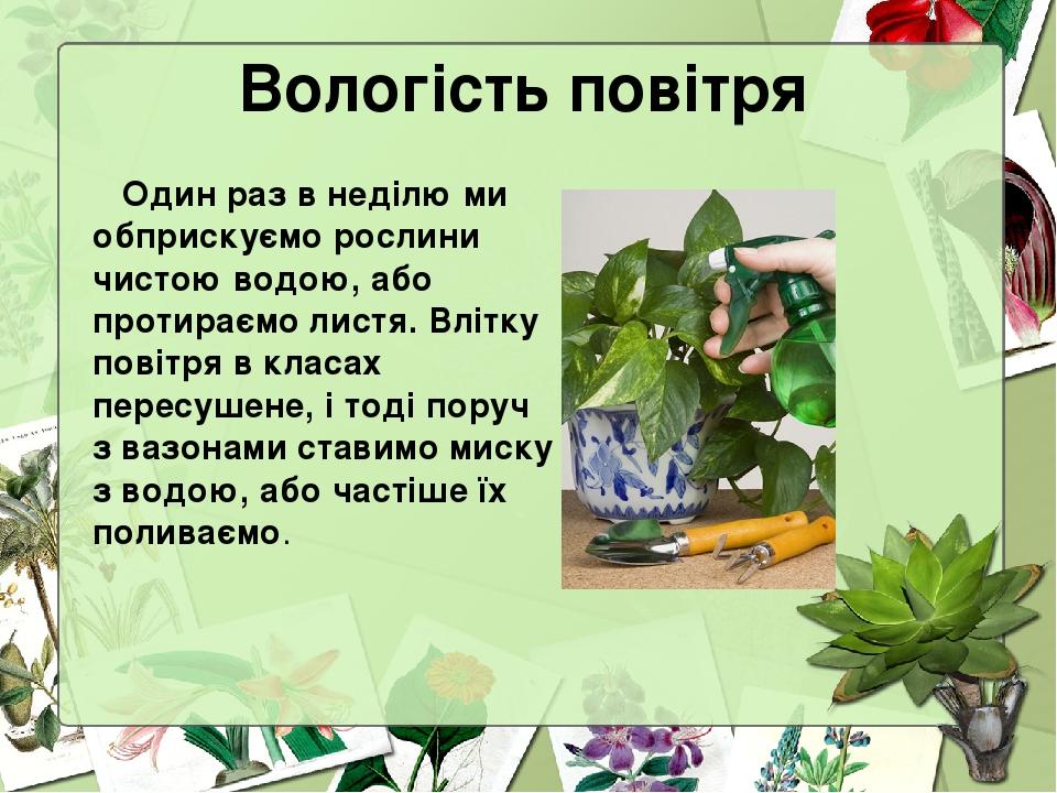 Вологість повітря Один раз в неділю ми обприскуємо рослини чистою водою, або протираємо листя. Влітку повітря в класах пересушене, і тоді поруч з в...