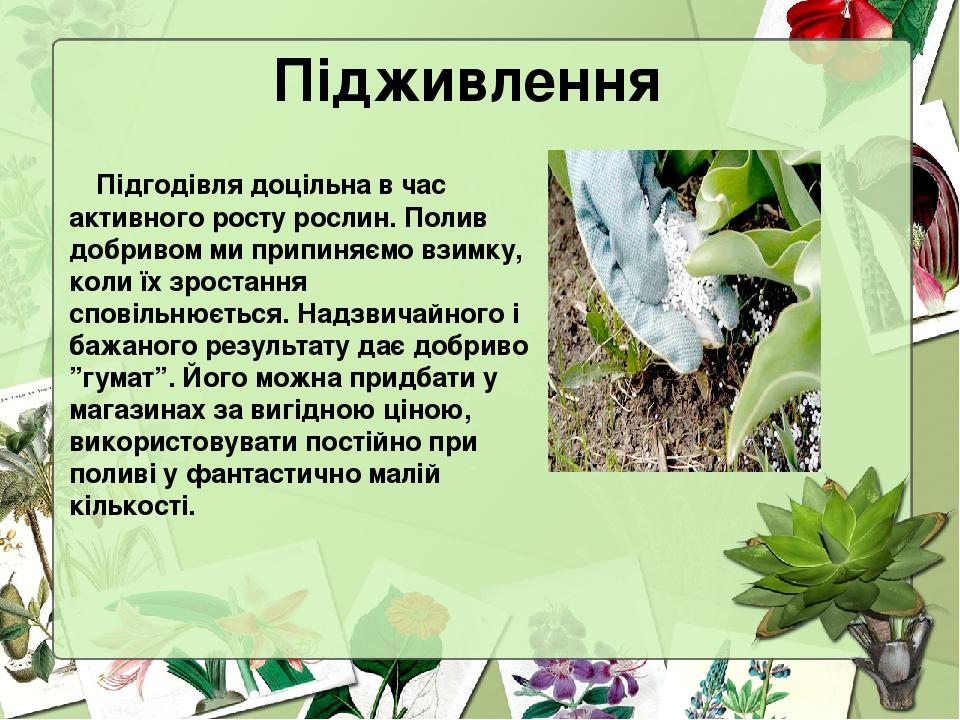 Підживлення Підгодівля доцільна в час активного росту рослин. Полив добривом ми припиняємо взимку, коли їх зростання сповільнюється. Надзвичайного ...