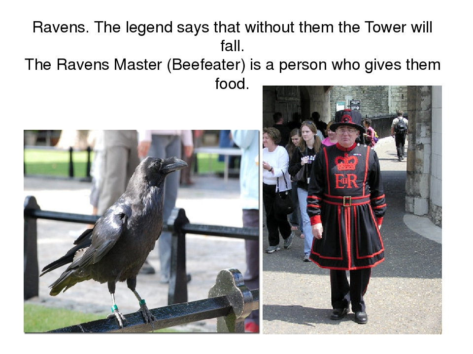 Ravens. The legend says that without them the Tower will fall. The Ravens Master (Beefeater) is a person who gives them food.