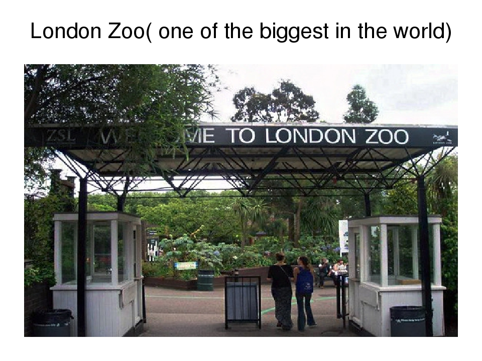 London Zoo( one of the biggest in the world)