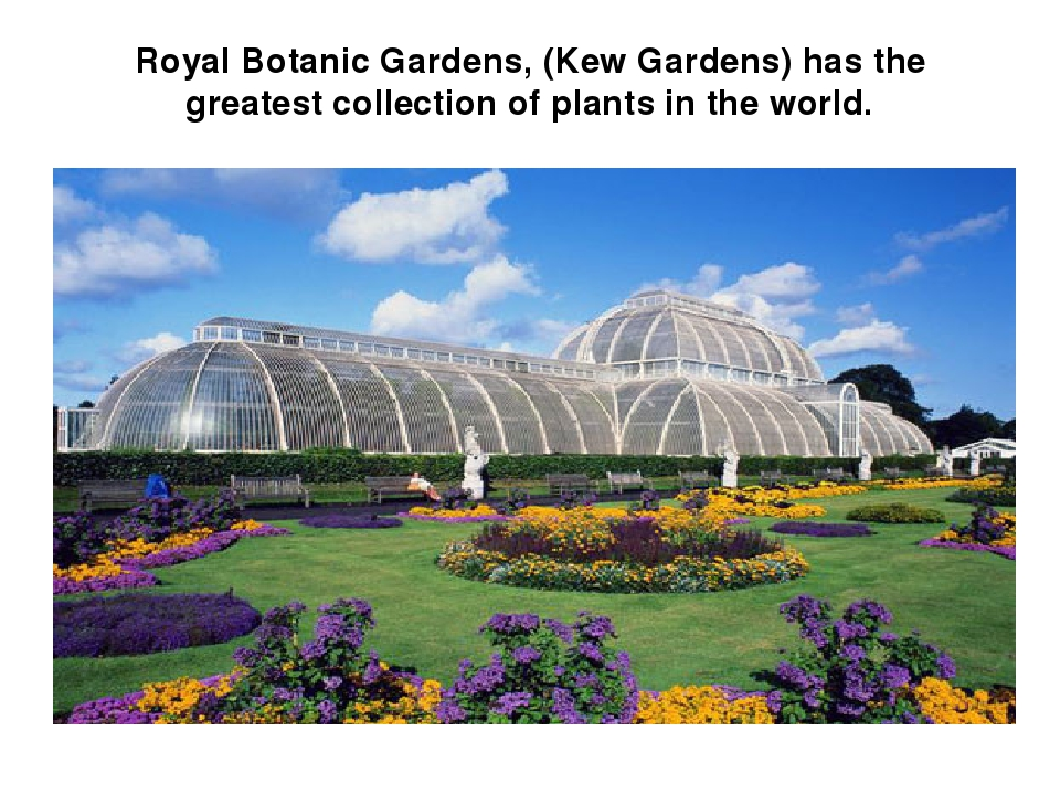Royal Botanic Gardens, (Kew Gardens) has the greatest collection of plants in the world.