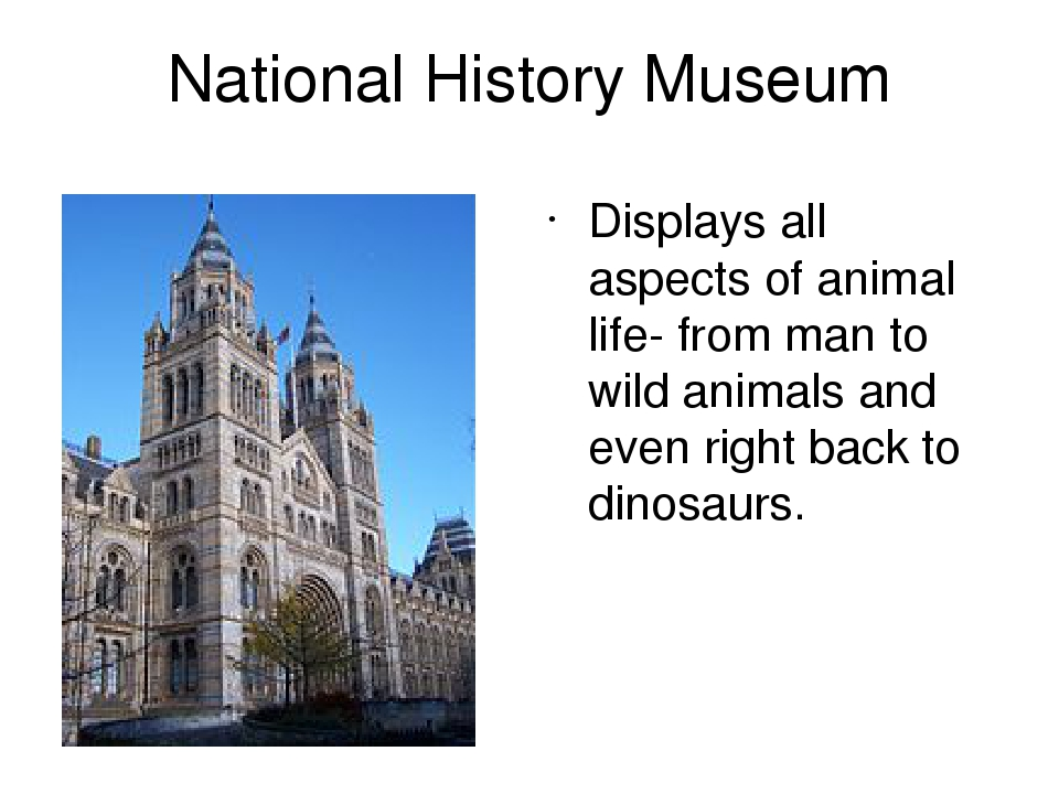 National History Museum Displays all aspects of animal life- from man to wild animals and even right back to dinosaurs.