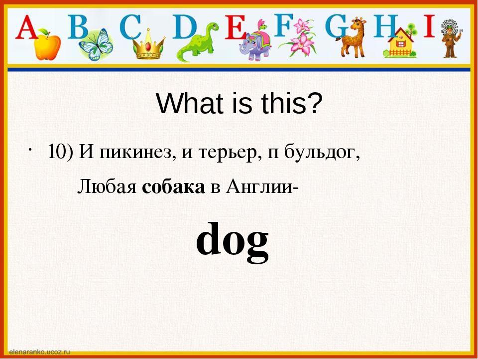 What is this? 10) И пикинез, и терьер, п бульдог, Любая собака в Англии- dog