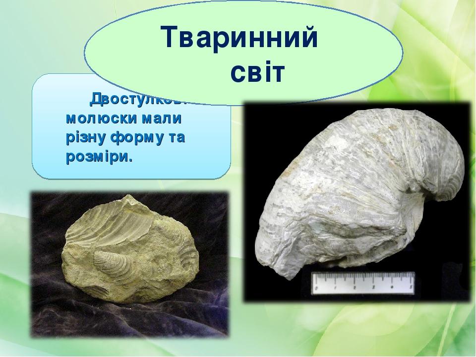 Двостулкові молюски мали різну форму та розміри. Тваринний світ