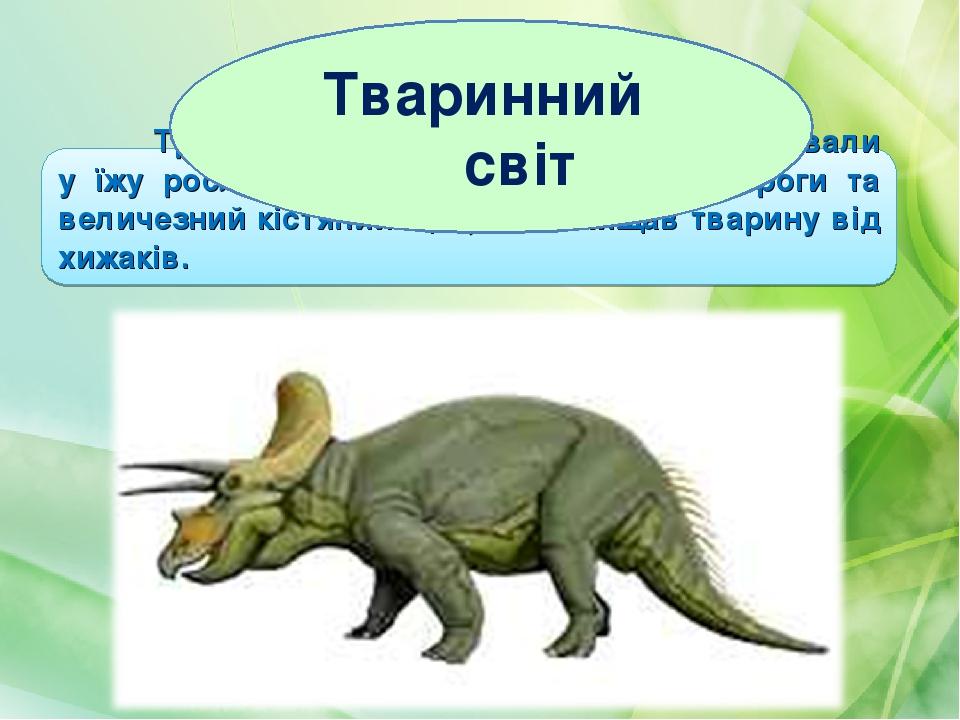 Трицератопси жили у сухих місцях, вживали у їжу рослинність. На голові були три роги та величезний кістяний щит, що захищав тварину від хижаків. Тв...