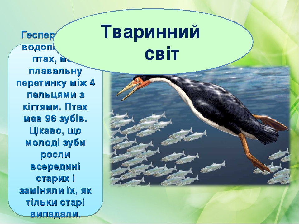 Гесперорніс – водоплавний птах, мав плавальну перетинку між 4 пальцями з кігтями. Птах мав 96 зубів. Цікаво, що молоді зуби росли всередині старих ...