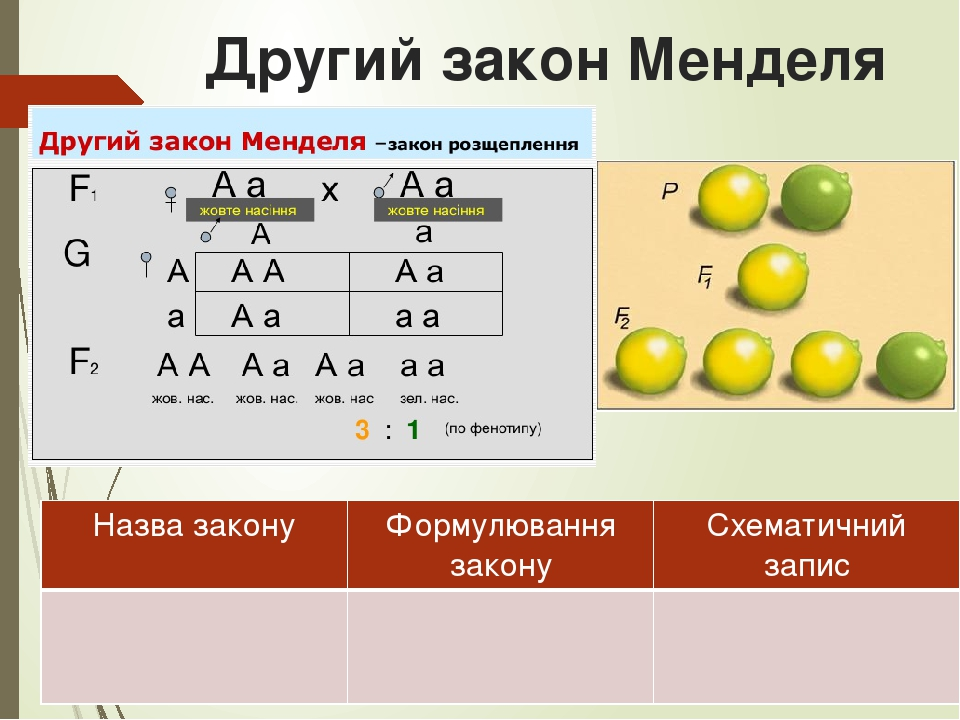 Другий закон Менделя Назва закону Формулювання закону Схематичний запис