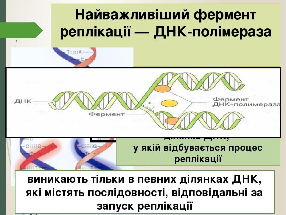 Найважливіший фермент реплікації — ДНК-полімераза забезпечує приєднання нових нуклеотидів до ланцюгів ДНК, що зростають РЕПЛІКАТИВНА ВИЛКА – ділянк...