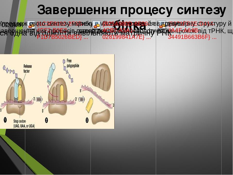 Завершення процесу синтезу білка