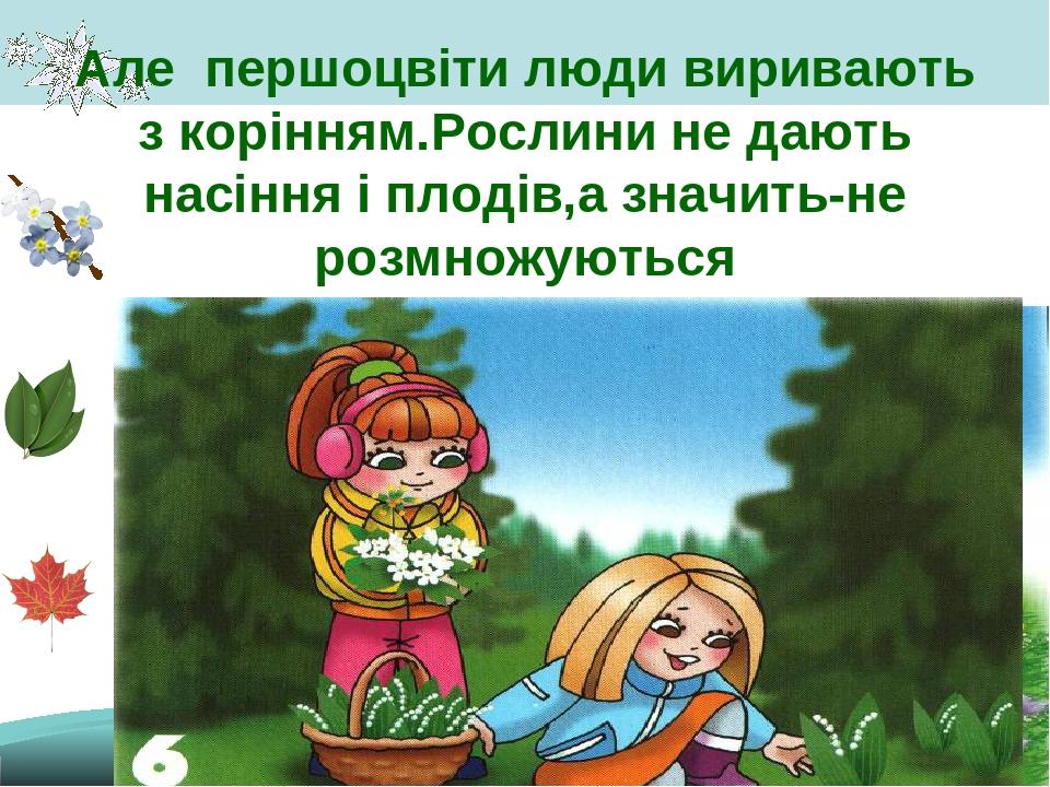 Але першоцвіти люди виривають з корінням.Рослини не дають насіння і плодів,а значить-не розмножуються