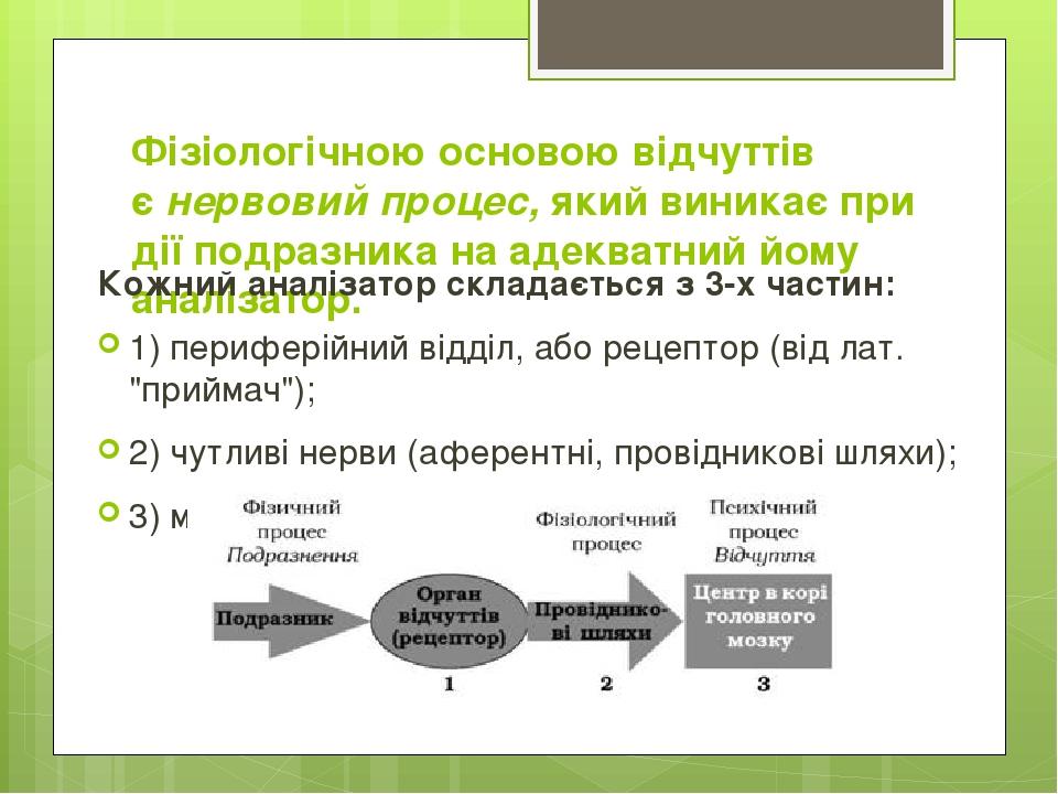 Фізіологічною основою відчуттів єнервовий процес,який виникає при дії подразника на адекватний йому аналізатор. Кожний аналізатор складається з 3...