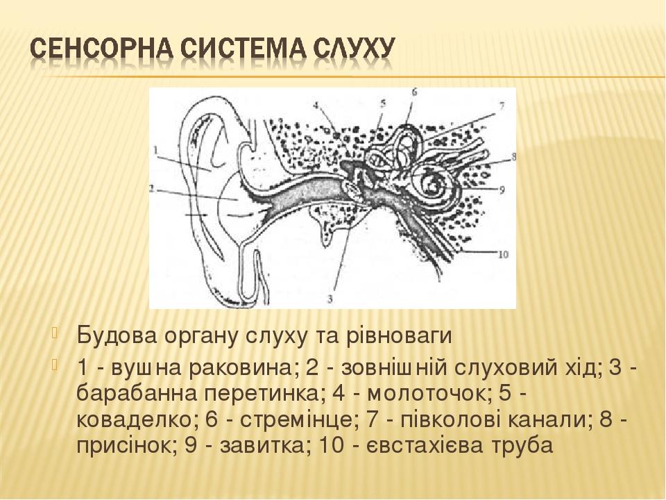 Будова органу слуху та рівноваги 1 - вушна раковина; 2 - зовнішній слуховий хід; 3 - барабанна перетинка; 4 - молоточок; 5 - коваделко; 6 - стремін...