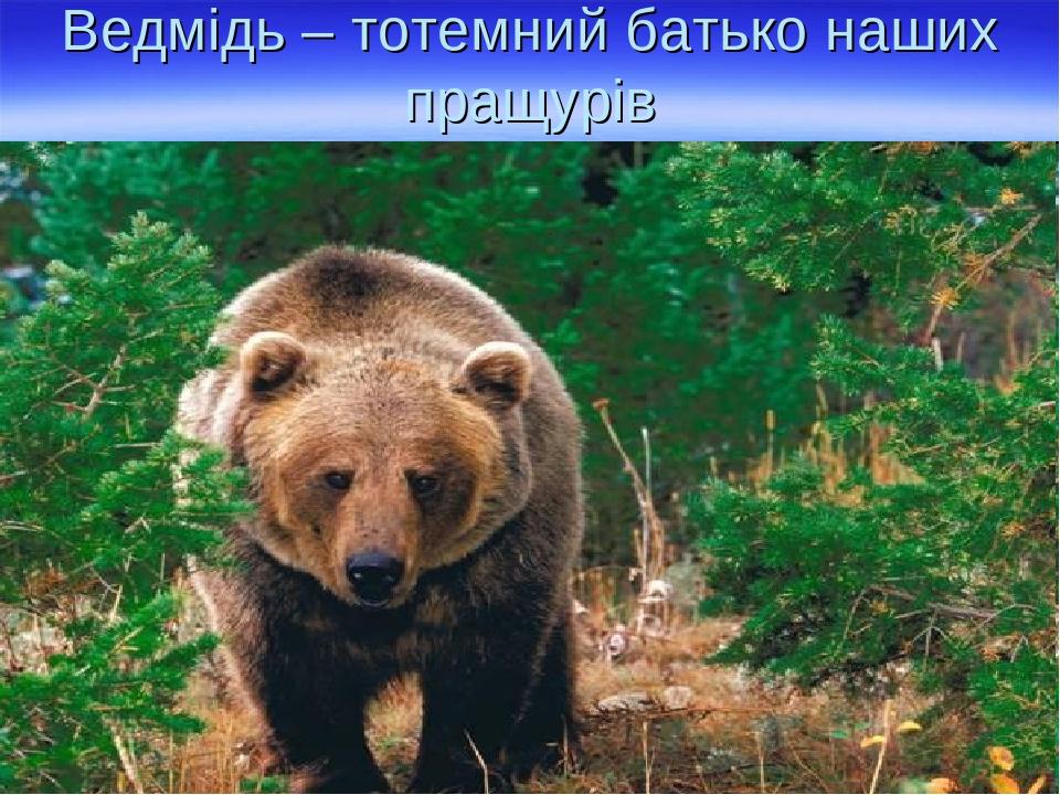 Ведмідь – тотемний батько наших пращурів