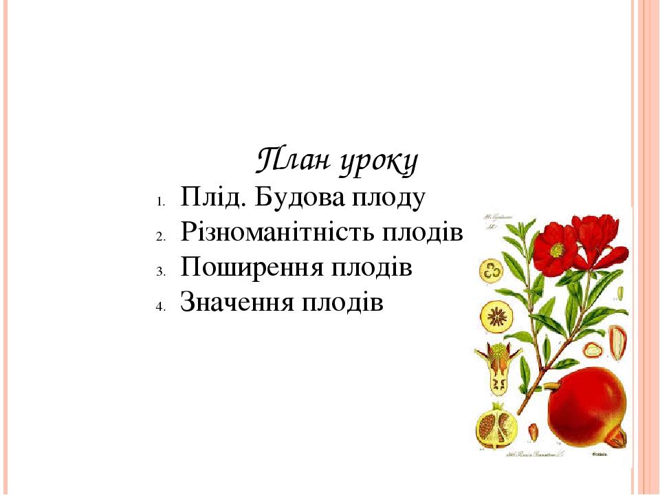 План уроку Плід. Будова плоду Різноманітність плодів Поширення плодів Значення плодів