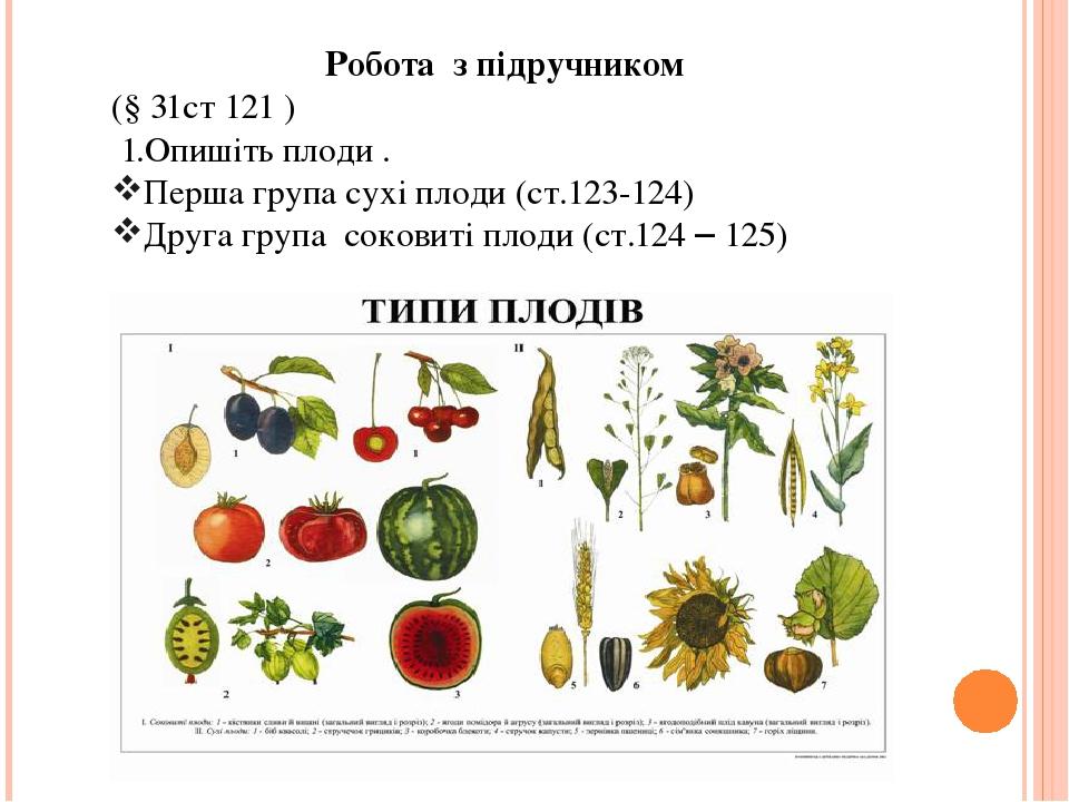 Робота з підручником (§ 31ст 121 ) 1.Опишіть плоди . Перша група сухі плоди (ст.123-124) Друга група соковиті плоди (ст.124 – 125)
