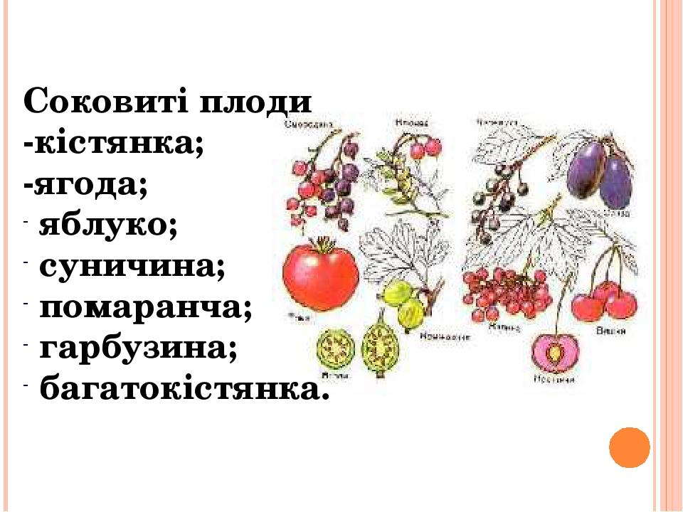 Соковиті плоди -кістянка; -ягода; яблуко; суничина; помаранча; гарбузина; багатокістянка.