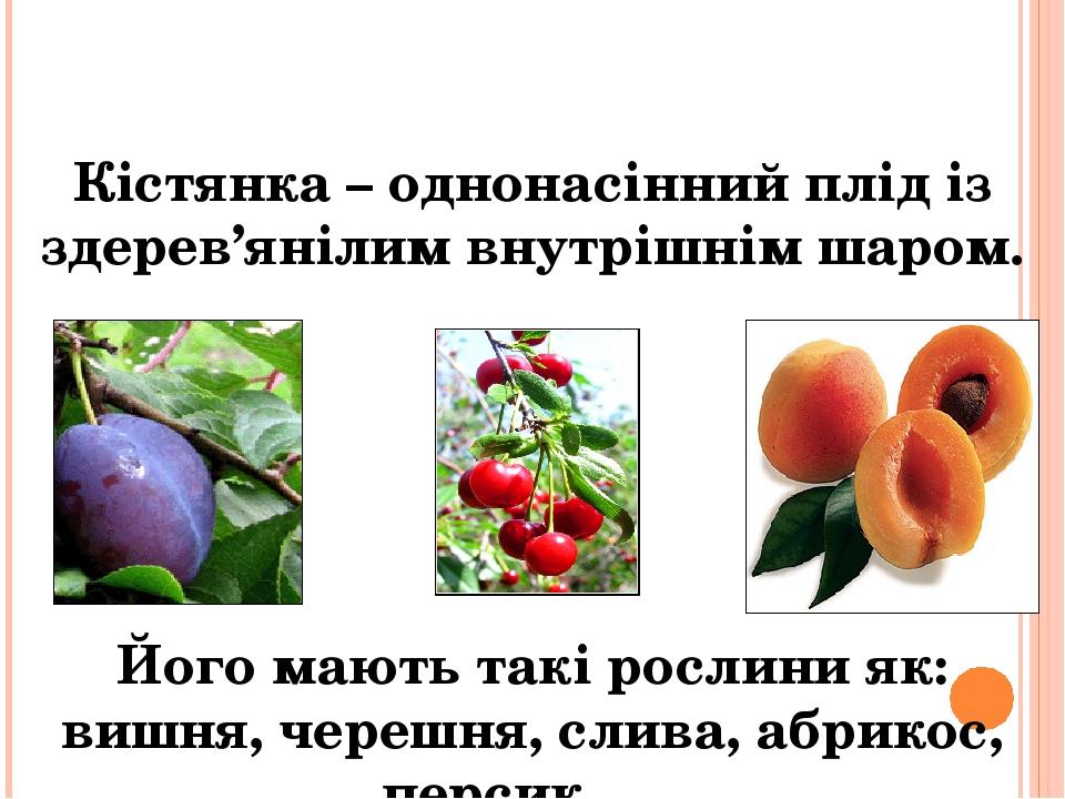 Кістянка – однонасінний плід із здерев'янілим внутрішнім шаром. Його мають такі рослини як: вишня, черешня, слива, абрикос, персик…