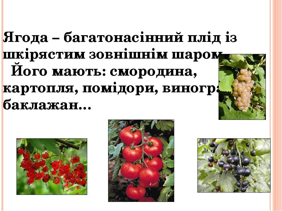 Ягода – багатонасінний плід із шкірястим зовнішнім шаром. Його мають: смородина, картопля, помідори, виноград, баклажан…
