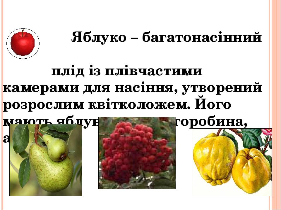 Яблуко – багатонасінний плід із плівчастими камерами для насіння, утворений розрослим квітколожем. Його мають яблуня, груша, горобина, айва…