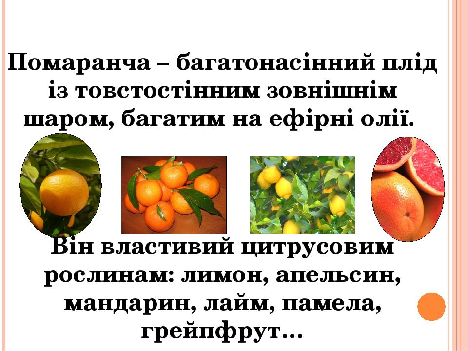 Помаранча – багатонасінний плід із товстостінним зовнішнім шаром, багатим на ефірні олії. Він властивий цитрусовим рослинам: лимон, апельсин, манда...