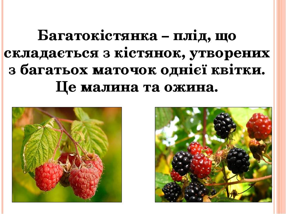Багатокістянка – плід, що складається з кістянок, утворених з багатьох маточок однієї квітки. Це малина та ожина.