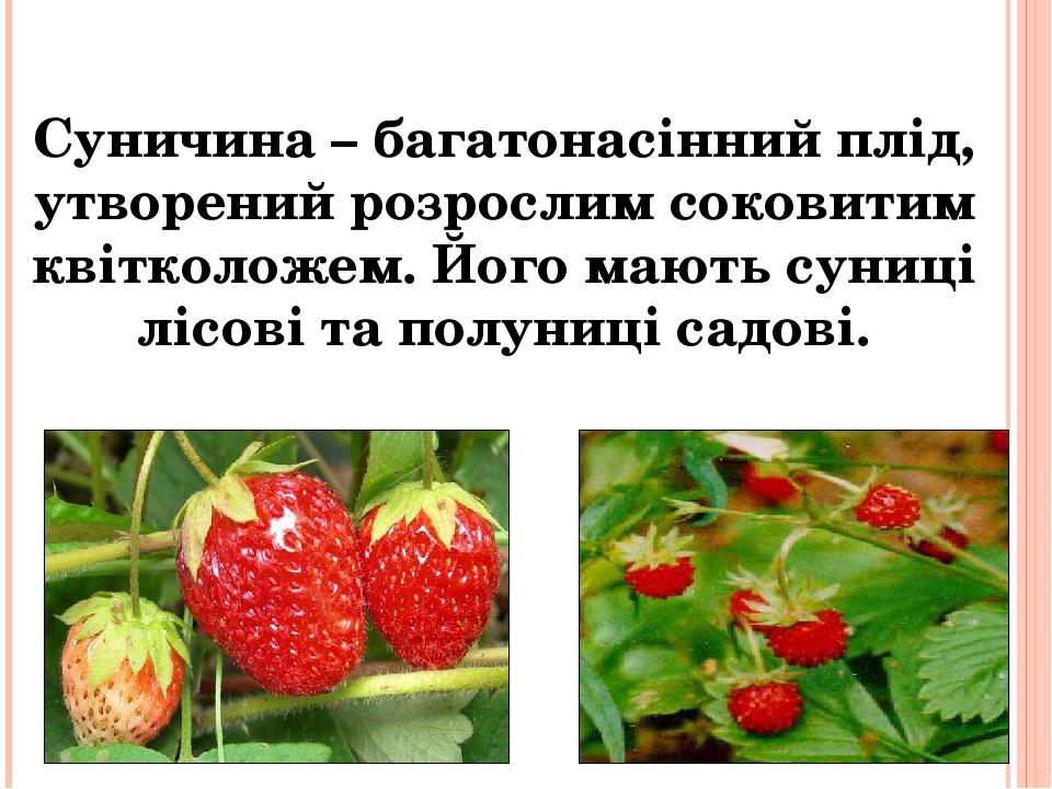 Суничина – багатонасінний плід, утворений розрослим соковитим квітколожем. Його мають суниці лісові та полуниці садові.