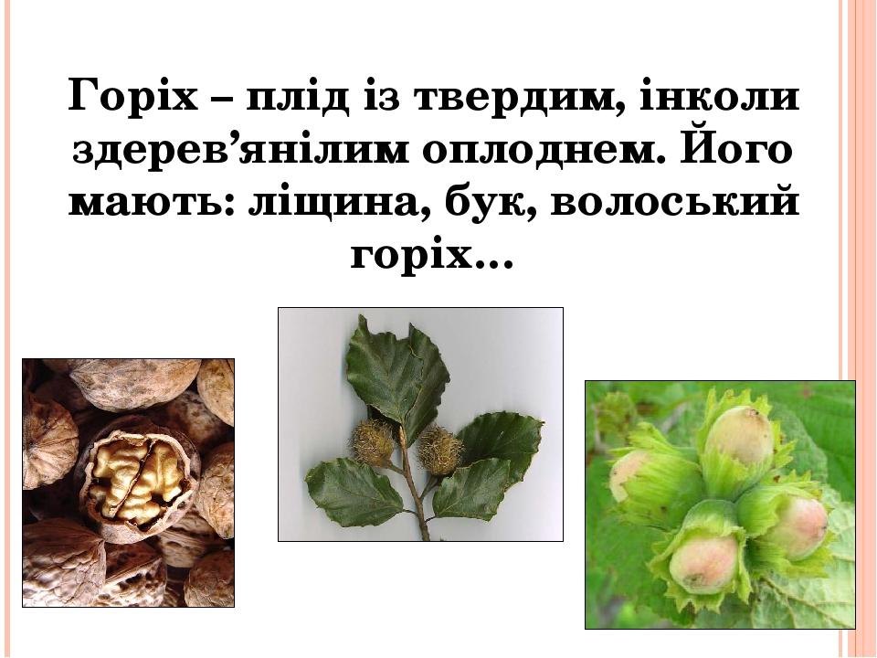 Горіх – плід із твердим, інколи здерев'янілим оплоднем. Його мають: ліщина, бук, волоський горіх…