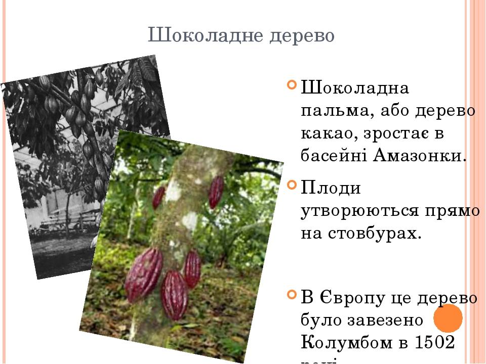 Шоколадне дерево Шоколадна пальма, або дерево какао, зростає в басейні Амазонки. Плоди утворюються прямо на стовбурах. В Європу це дерево було заве...