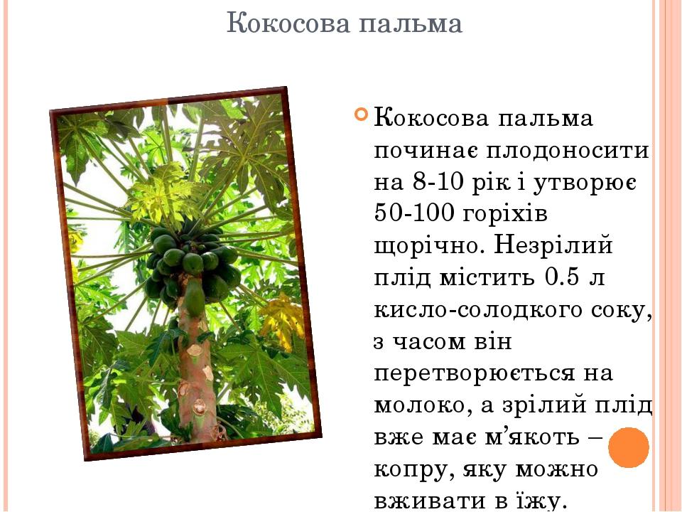 Кокосова пальма Кокосова пальма починає плодоносити на 8-10 рік і утворює 50-100 горіхів щорічно. Незрілий плід містить 0.5 л кисло-солодкого соку,...