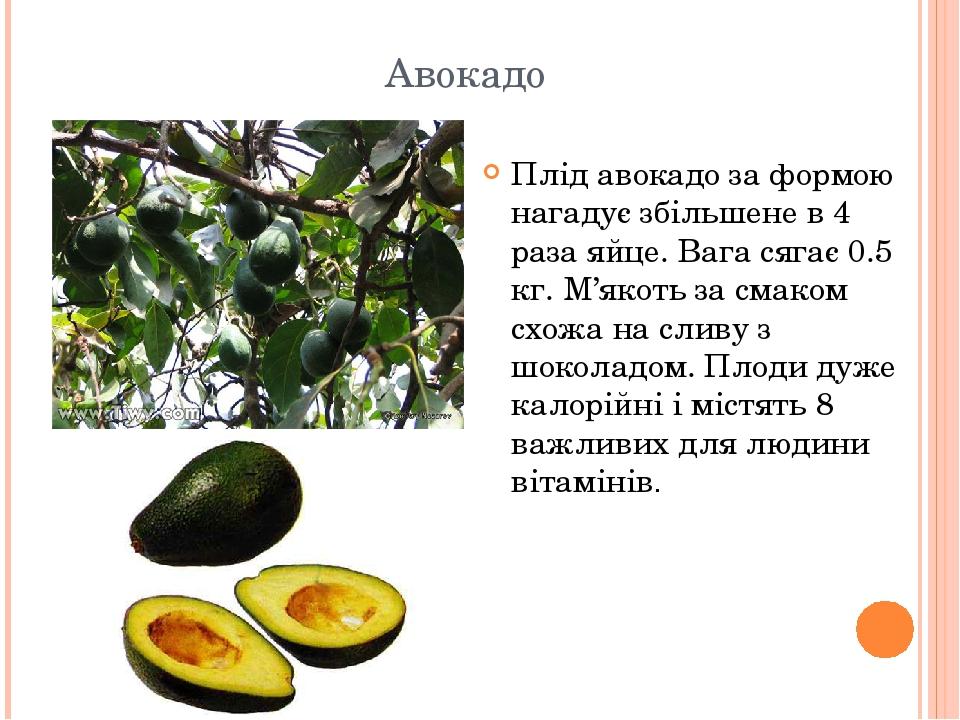 Авокадо Плід авокадо за формою нагадує збільшене в 4 раза яйце. Вага сягає 0.5 кг. М'якоть за смаком схожа на сливу з шоколадом. Плоди дуже калорій...