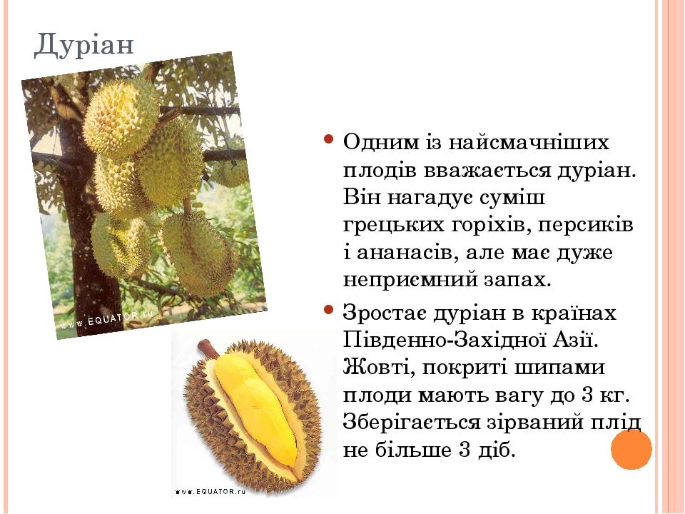 Дуріан Одним із найсмачніших плодів вважається дуріан. Він нагадує суміш грецьких горіхів, персиків і ананасів, але має дуже неприємний запах. Зрос...