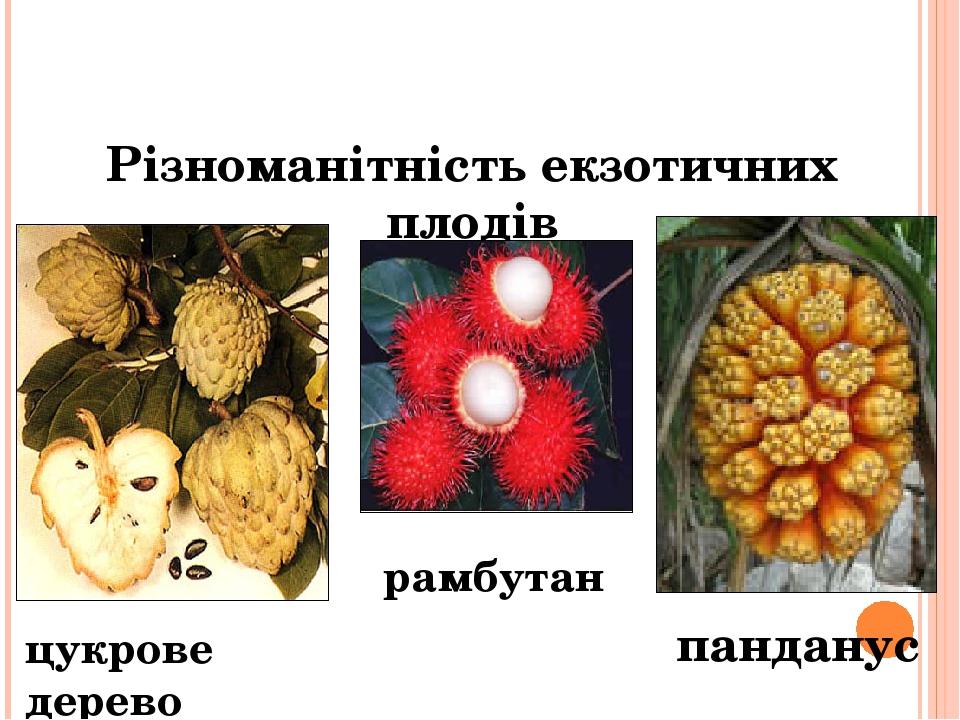 Різноманітність екзотичних плодів панданус цукрове дерево ( гуаява) рамбутан