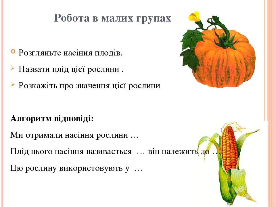 Робота в малих групах Розгляньте насіння плодів. Назвати плід цієї рослини . Розкажіть про значення цієї рослини Алгоритм відповіді: Ми отримали на...