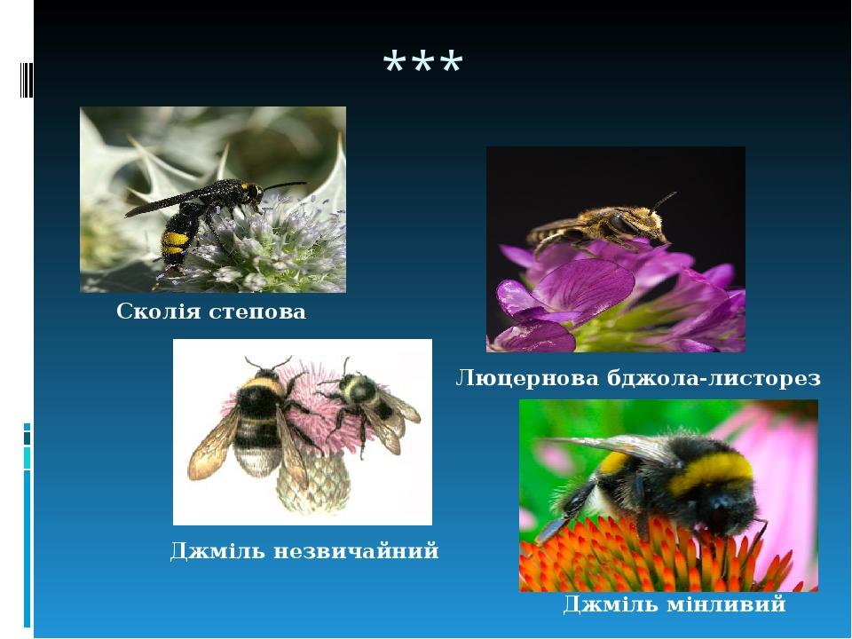 *** Сколія степова Люцернова бджола-листорез Джміль мінливий Джміль незвичайний