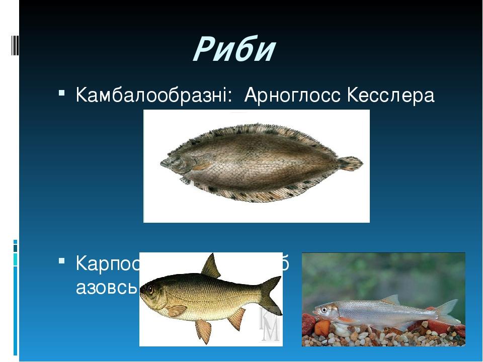 Риби Камбалообразні: Арноглосс Кесслера Карпообразні: Вирезуб Шемая азовська