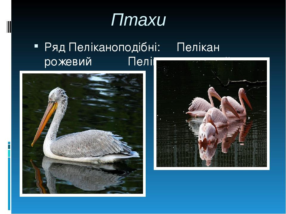 Птахи Ряд Пеліканоподібні: Пелікан рожевий Пелікан кучерявий