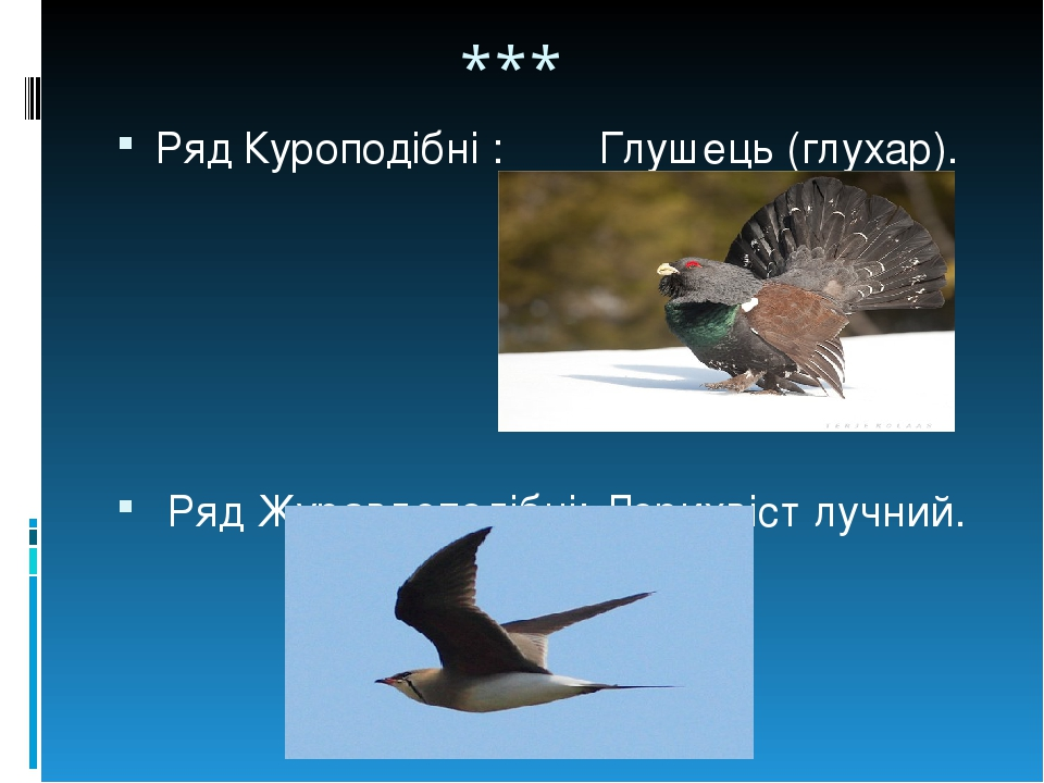 *** Ряд Куроподібні : Глушець (глухар). Ряд Журавлеподібні: Дерихвіст лучний.