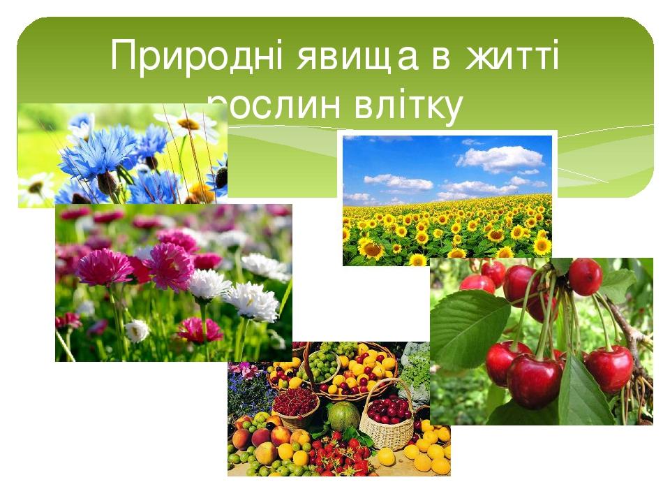 Природні явища в житті рослин влітку