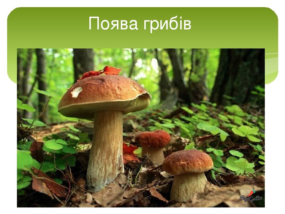 Поява грибів