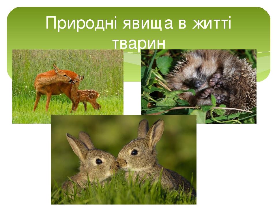Природні явища в житті тварин