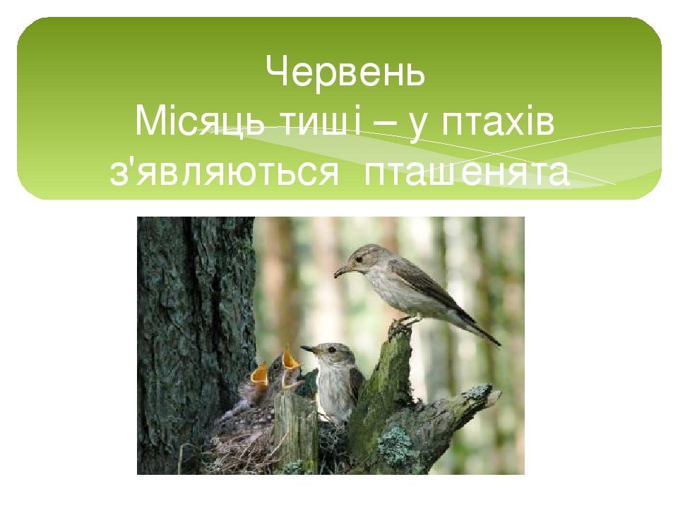 Червень Місяць тиші – у птахів з'являються пташенята