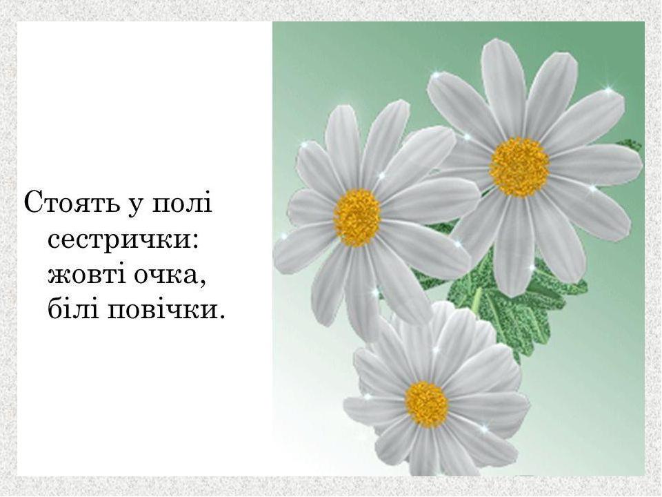 Картинки цветы ромашки анимация