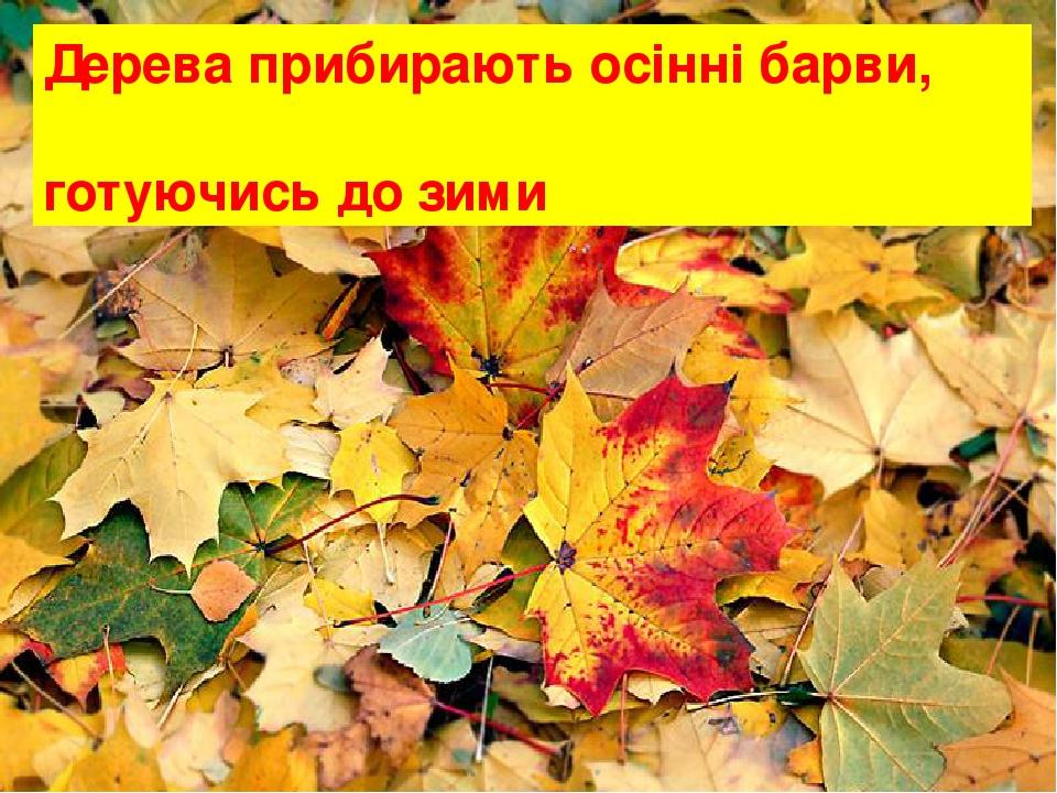 Дерева прибирають осінні барви, готуючись до зими
