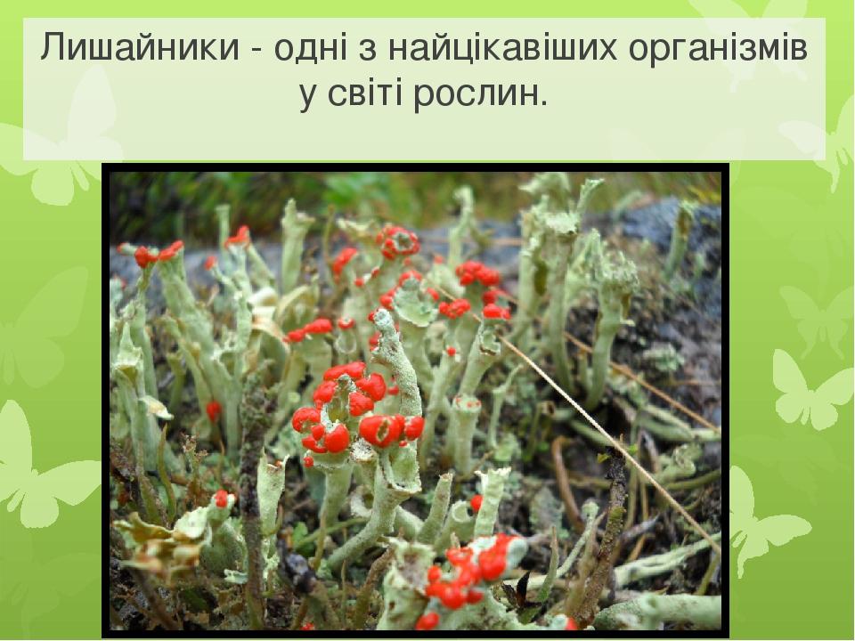 Лишайники - одні з найцікавіших організмів у світі рослин.