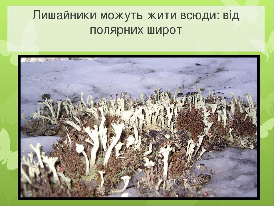 Лишайники можуть жити всюди: від полярних широт