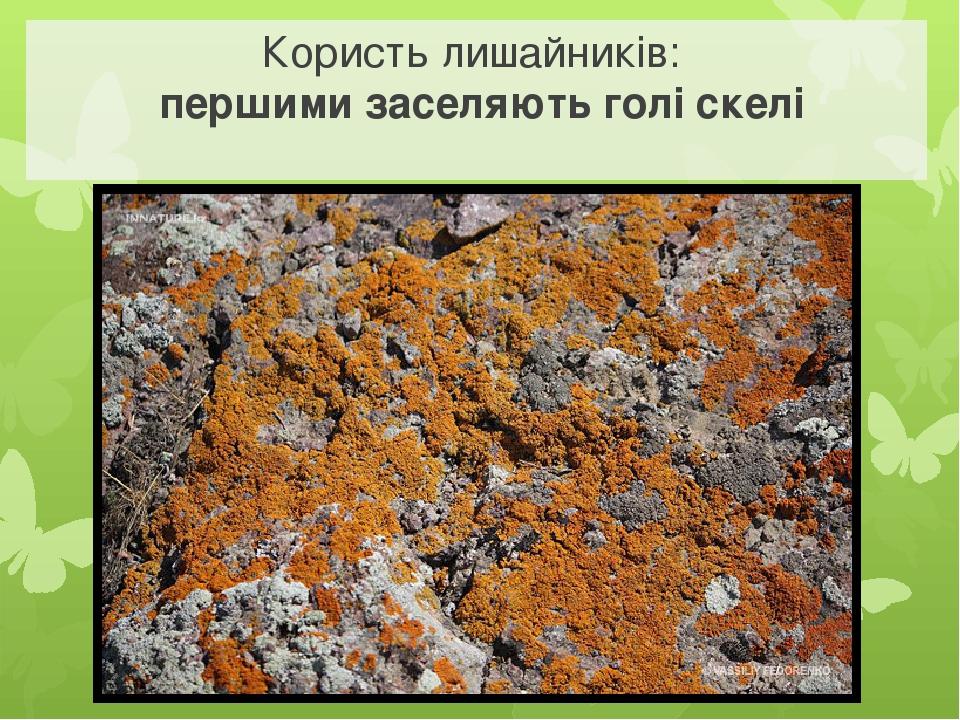 Користь лишайників: першими заселяють голі скелі