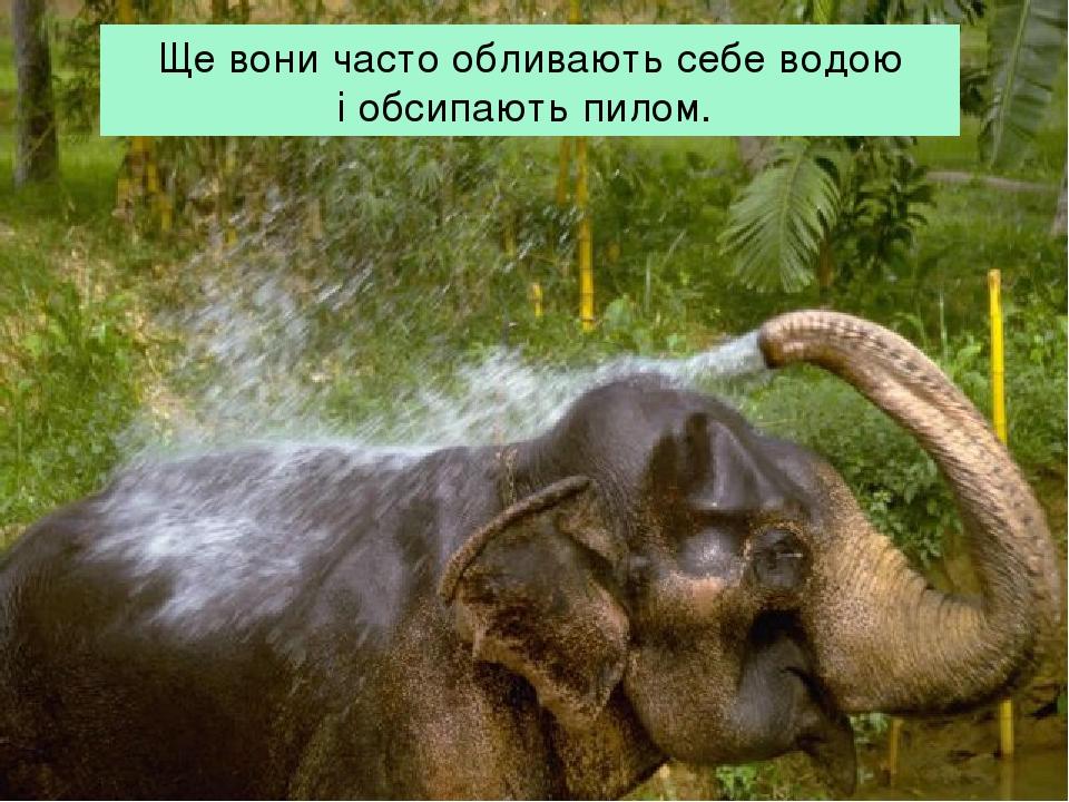 Ще вони часто обливають себе водою і обсипають пилом.