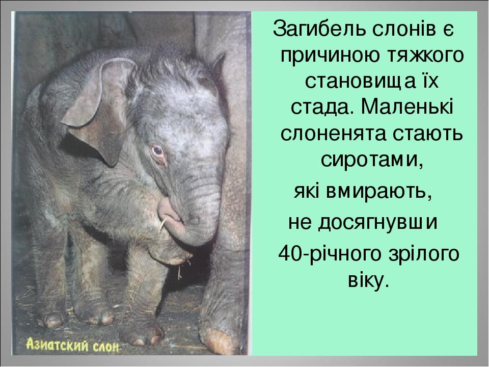 Загибель слонів є причиною тяжкого становища їх стада. Маленькі слоненята стають сиротами, які вмирають, не досягнувши  40-річного зрілого віку.